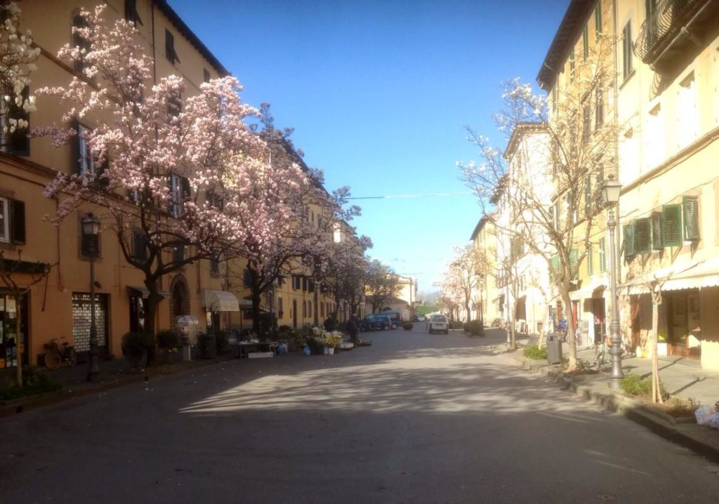 Camelie a Lucca
